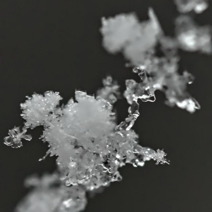 SnowOnSpiderWeb
