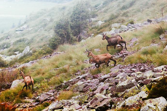 Trentino_estate_2021_0290