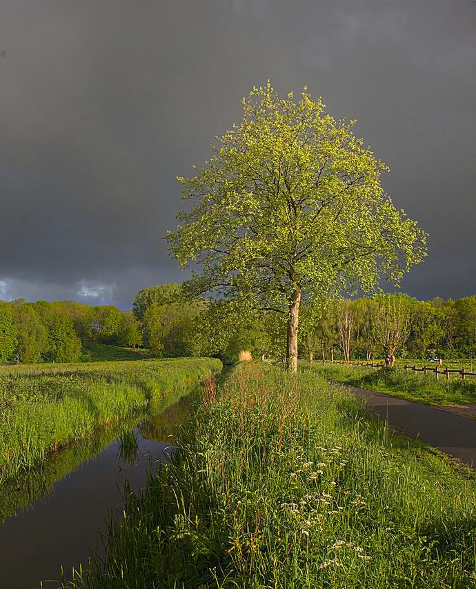 tree.clouds.light