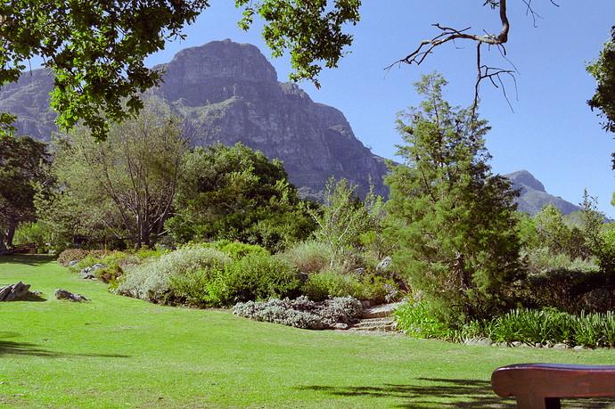 Kirstenbosch Neg 35_dt