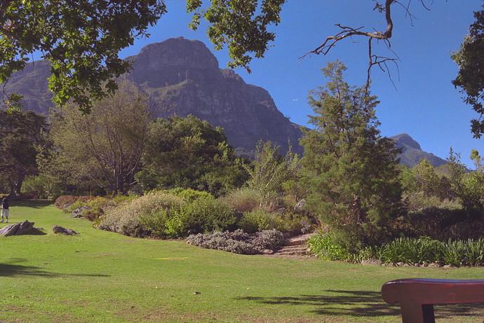 Kirstenbosch Neg 35