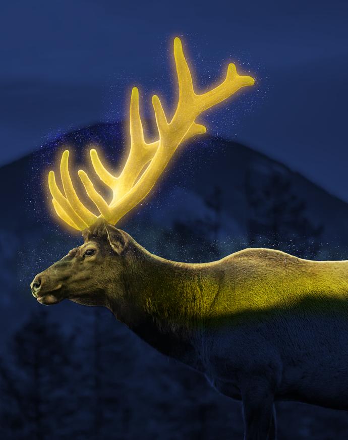 Deer glowing