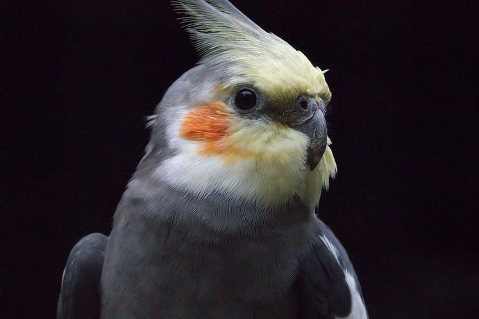 _bird_denoise1+iain