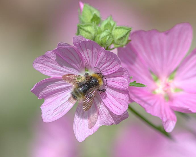 dts.bumblebee.sunlight