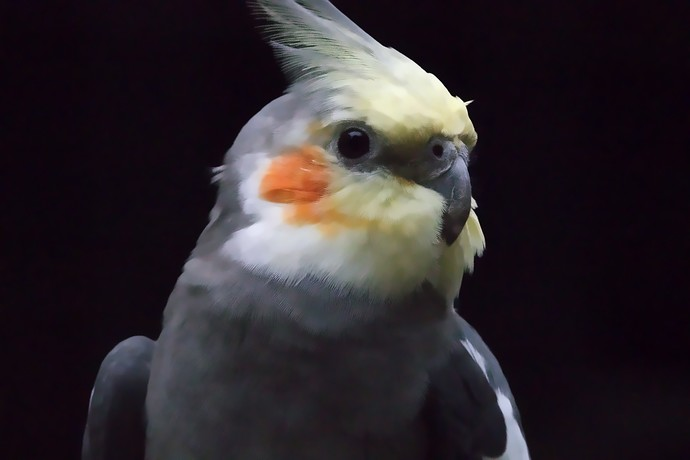 _bird_denoise0