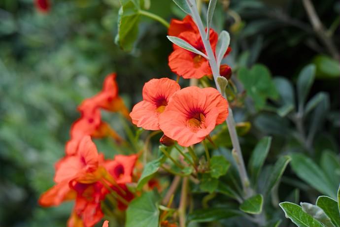 flowersp