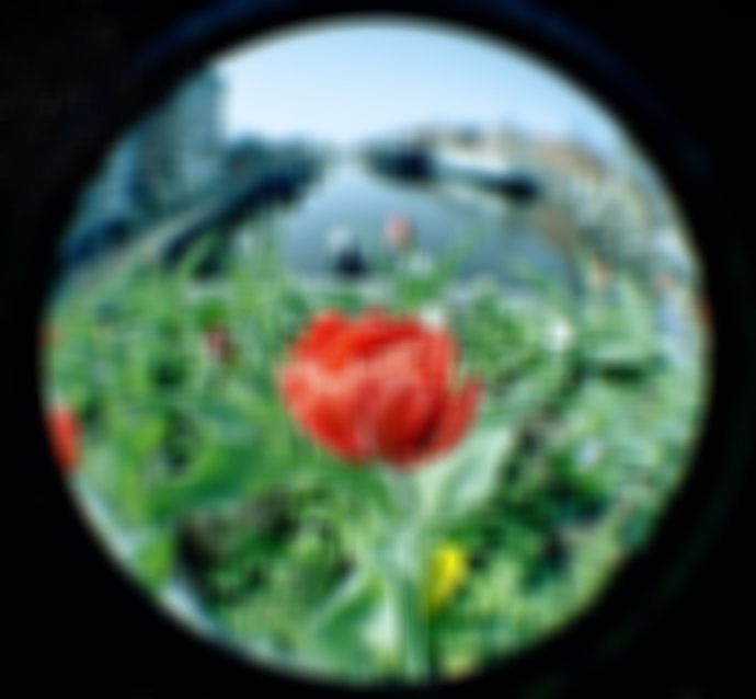 tulip box blur