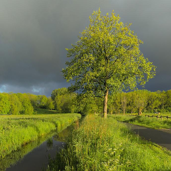 tree.clouds.light_13.rw2.xmp w 1 to 1 crop