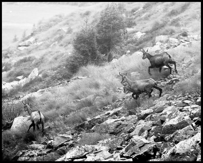 foggy-encounters-Trentino_estate_2021_0290_02