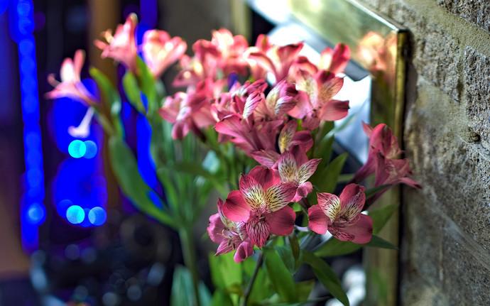 flowers.light