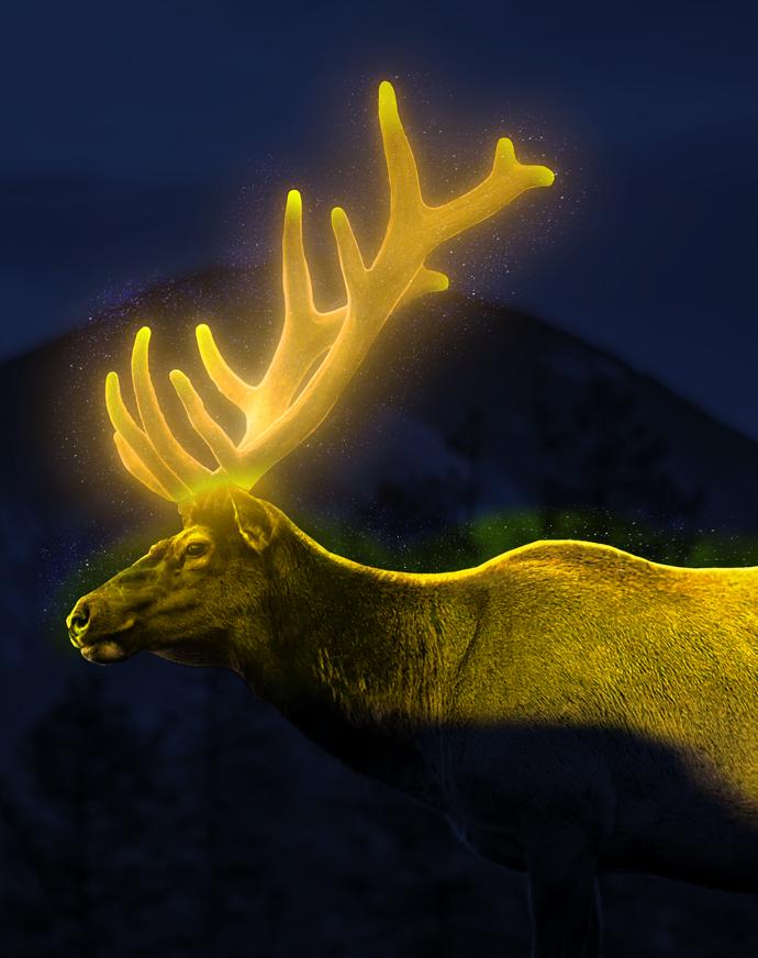 Deer glowing 2