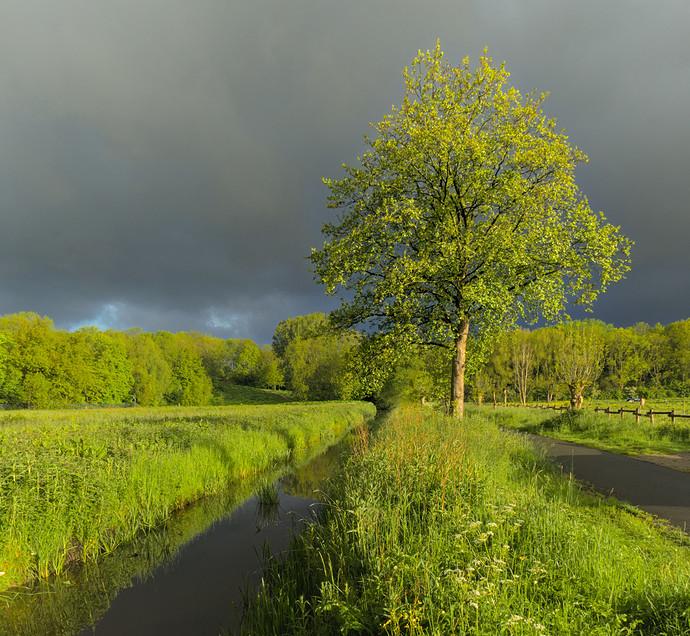 tree.clouds.light_13.rw2.xmp