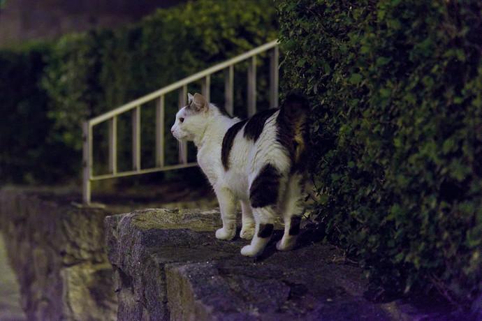 cat.under.streetlights