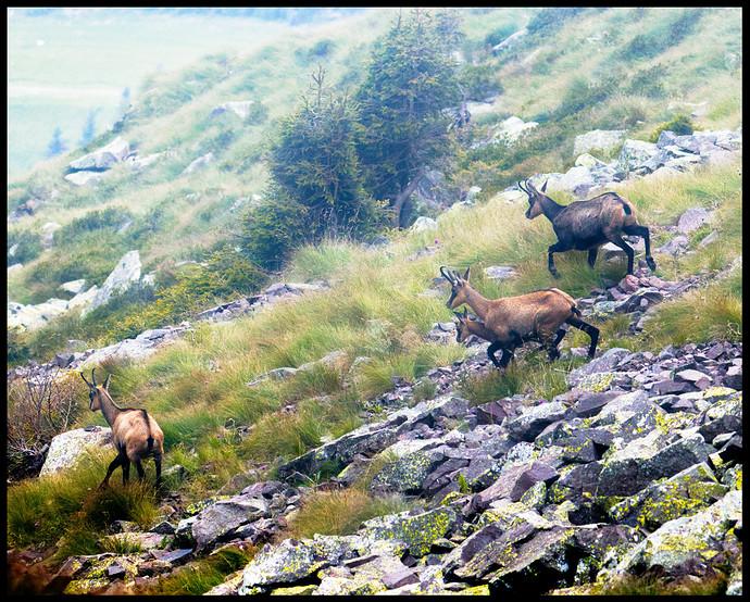 foggy-encounters-Trentino_estate_2021_0290_01