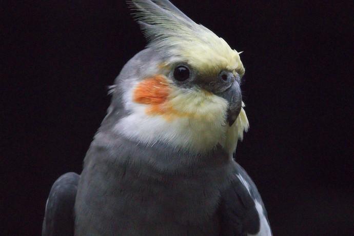 _bird_denoise