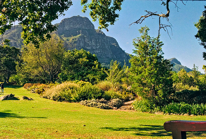 a-Kirstenbosch Neg 35