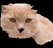 cat(64%2C%2022%2C%20128%2C%20100)