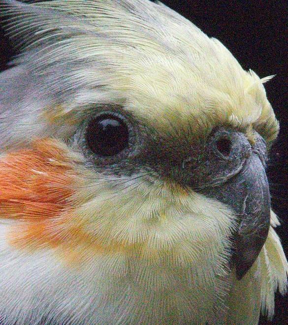 _bird_denoise_a